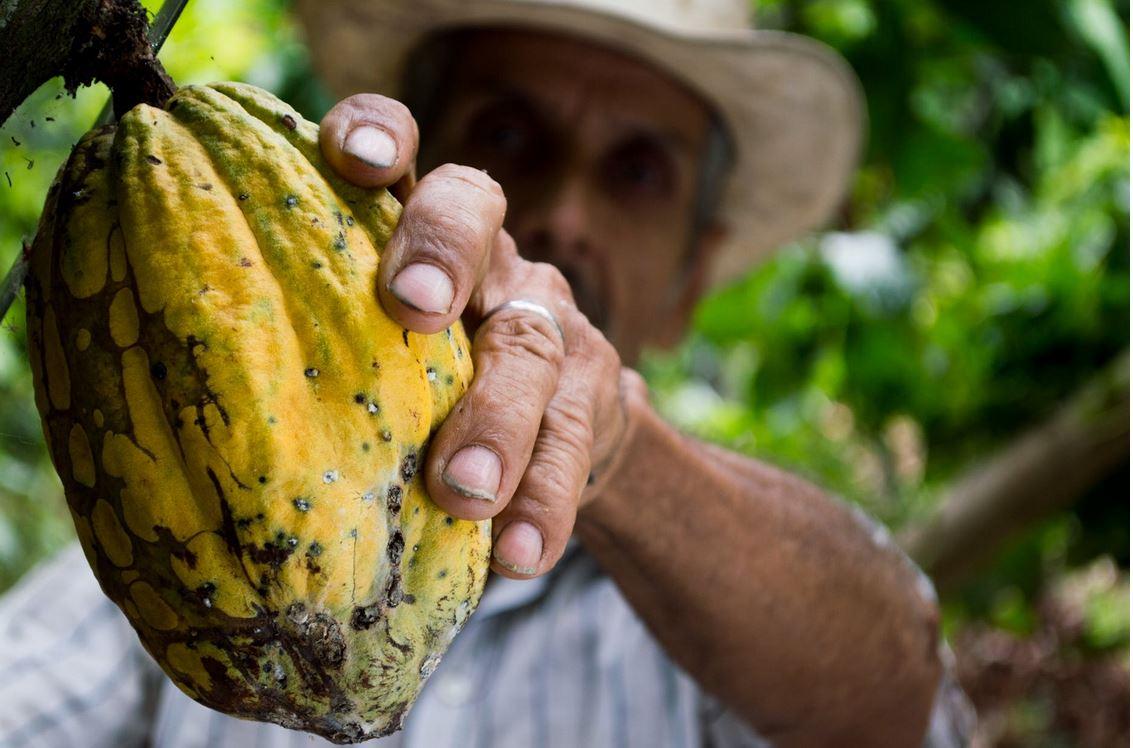 ¿Cuanto costarán sus huevos de pascua? Balance de los precios del cacao