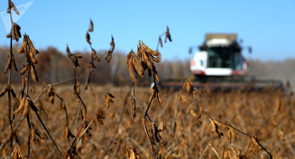 Las exportaciones de soja caen un 80% por la guerra comercial de EEUU y China